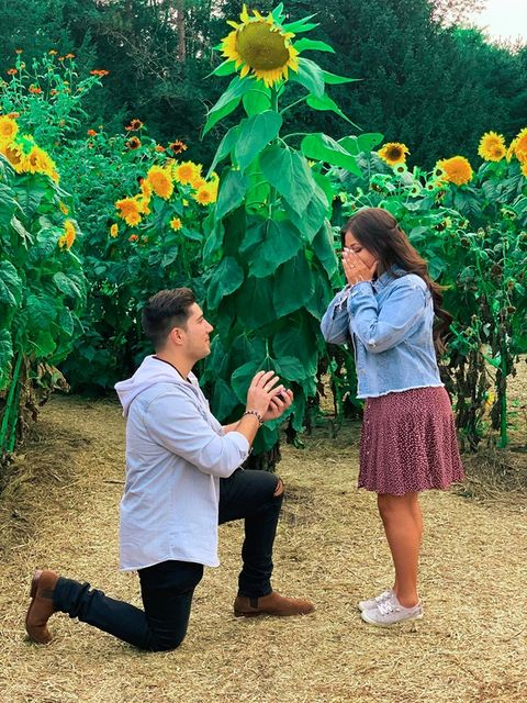 Marriage Proposal in the Sunflower House: Erica Rubino