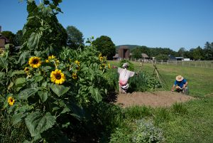 Sunflower House and Gardens