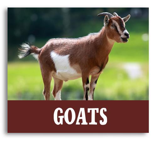 farm animals, pastures & barns