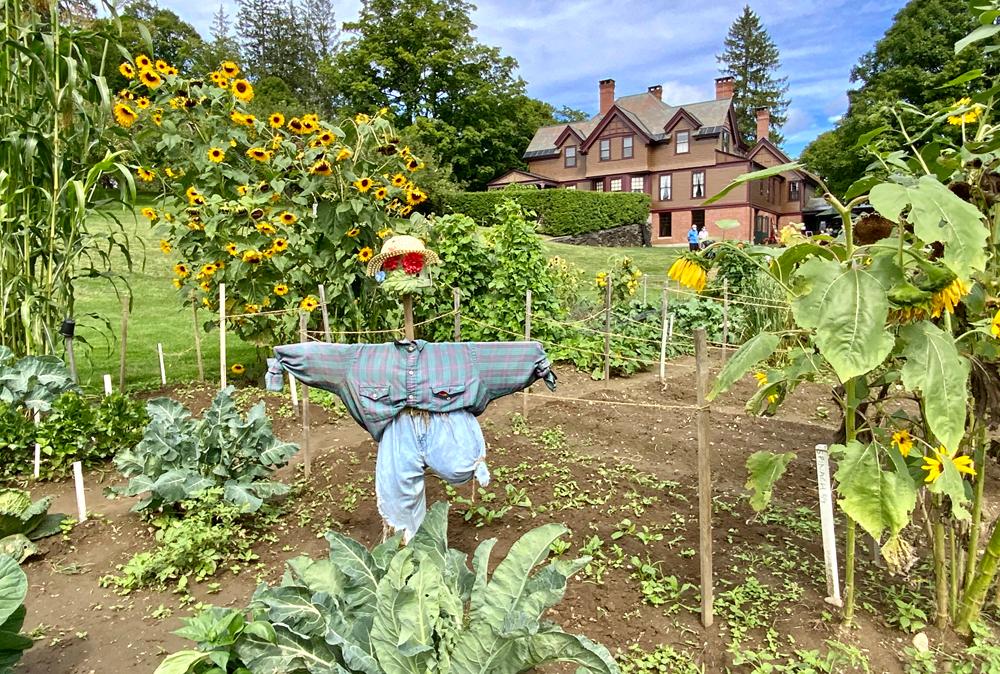 billings-farm-sunflower-garden