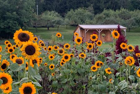 billings-farm-woodstock-vt-flower-garden